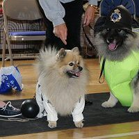 North of England Keeshond Club  July Open Show 2009