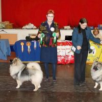 North of England Keeshond Club November Ch Show 2013