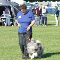Activities with your Keeshond