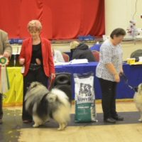 North of England Keeshond Club Champ Show November 2015
