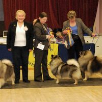 North of England Keeshond Club  February Open Show 2013