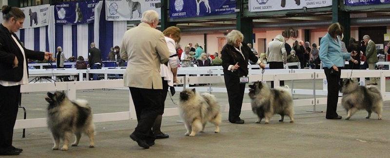 Post Graduate Dog