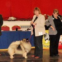 North of Keeshond Club  Championship Show 2014