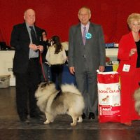 North of England Keeshond Club  Champ Show 2012