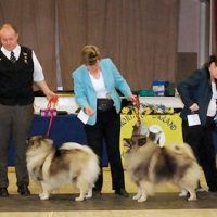 North of England Keeshond Club  February Open Show 2014