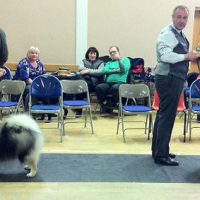 North of England Keeshond Club  February Open show 2012