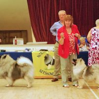 North of England Keeshond Club July Open Show 2013
