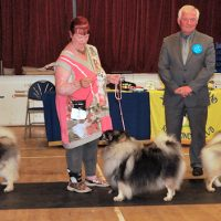 North of England Keeshond Club  July Open Show 2014