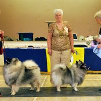 North of England Keeshond Club  July Open Show 2012