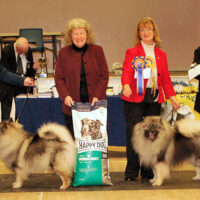 North of England Keeshond Club Open Show February 2015