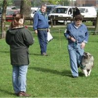 Obedience Show Classes