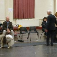 North of England Keeshond Club  Championship Show 2007