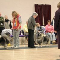 North Of England Keeshond Club Championship Show 2005