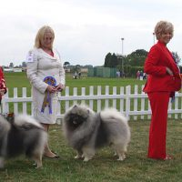 North of England Keeshond Club  75th Anniversary Ch Show