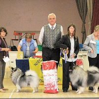 North of England Keeshond Club  July Open Show 2010