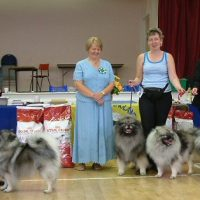 The North of England Keeshond Club  July Open Show 2008