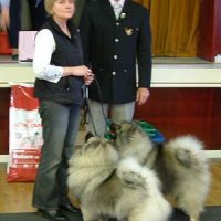 The North of England Keeshond Club March Open Show 2008