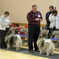 North of England Keeshond Club March Open Show 2007