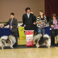 North of England Keeshond Club  March Open Show 2009
