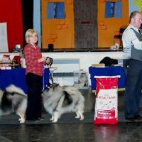 North of England Keeshond Club  November Open show